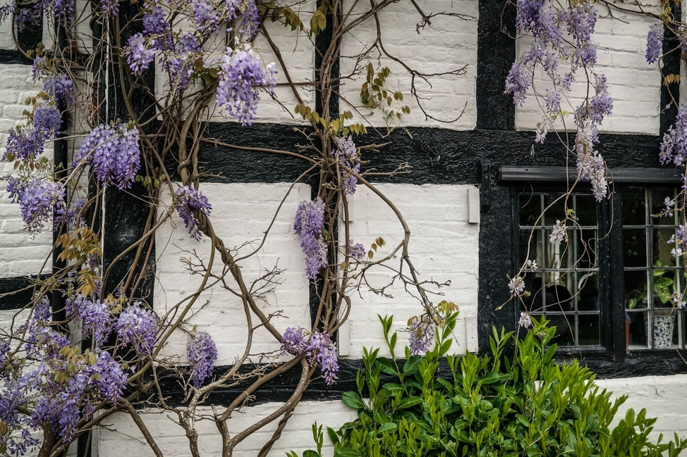 Wisteria craziness -- What's on in Brighton