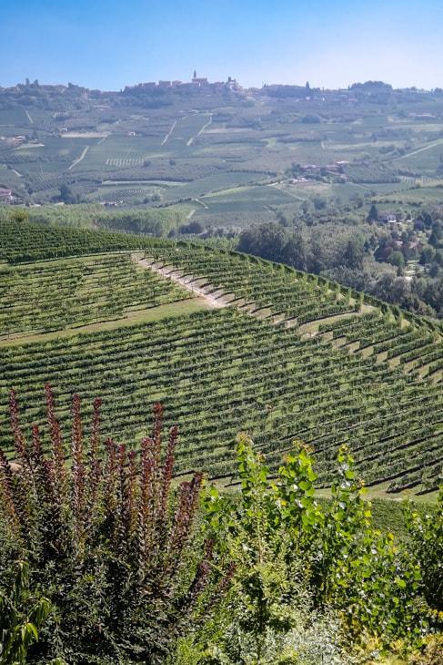 Monforte, Italy
