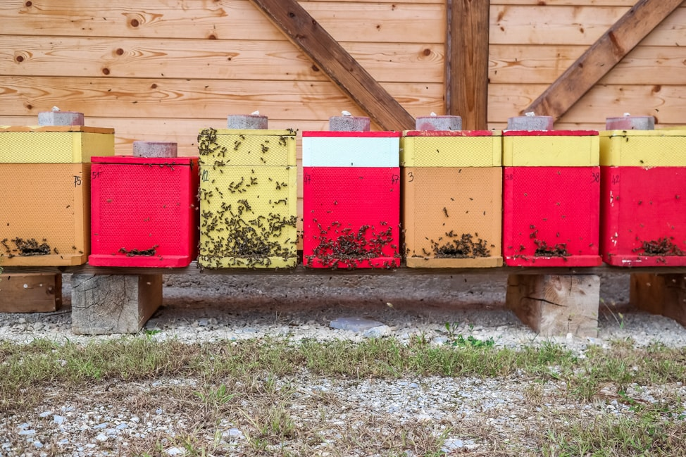 Big Berry Resort: the local honey maker and his bees