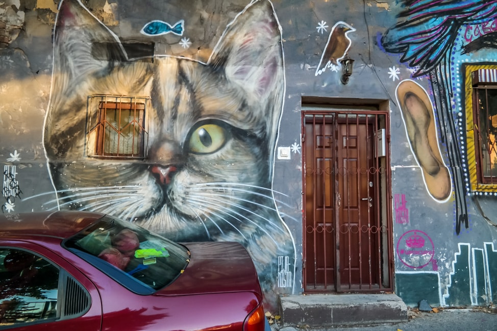 belgrade street art: cat
