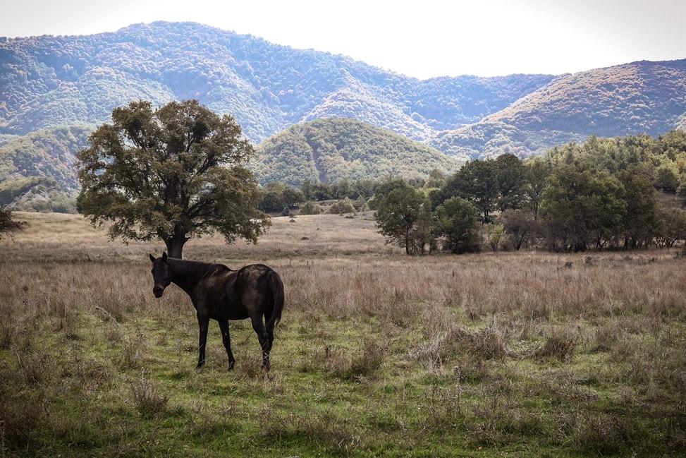 prespes national park horse