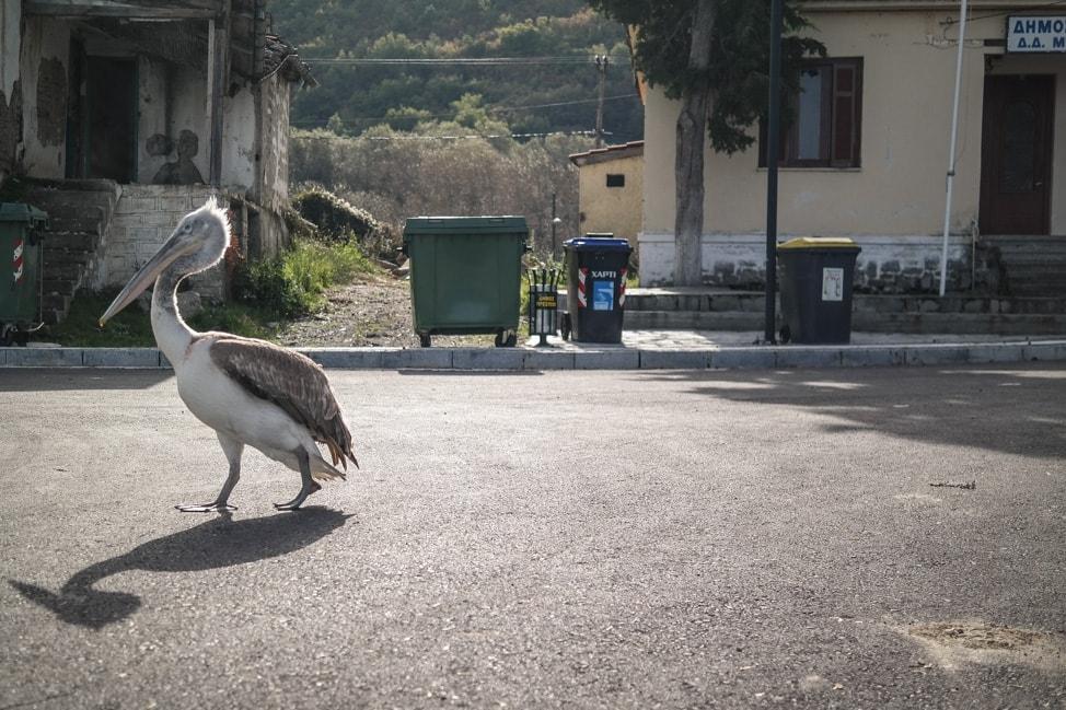 prespes national park pelican 2