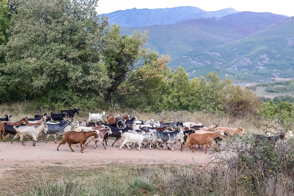 prespes national park goats