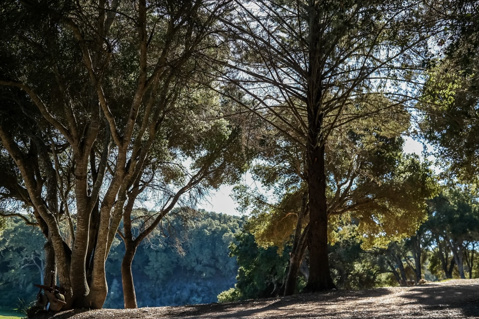 california road trip oak trees