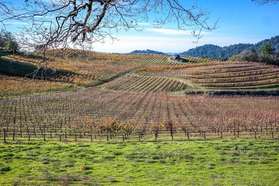 california road trip napa valley view
