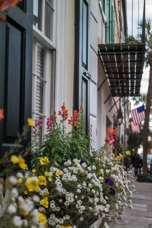 best things to do in charleston the window boxes in charleston are charming and lovely