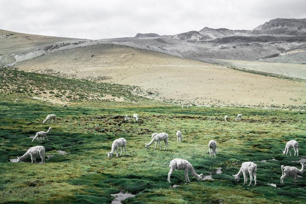 spring break ideas peru's luscious highlands