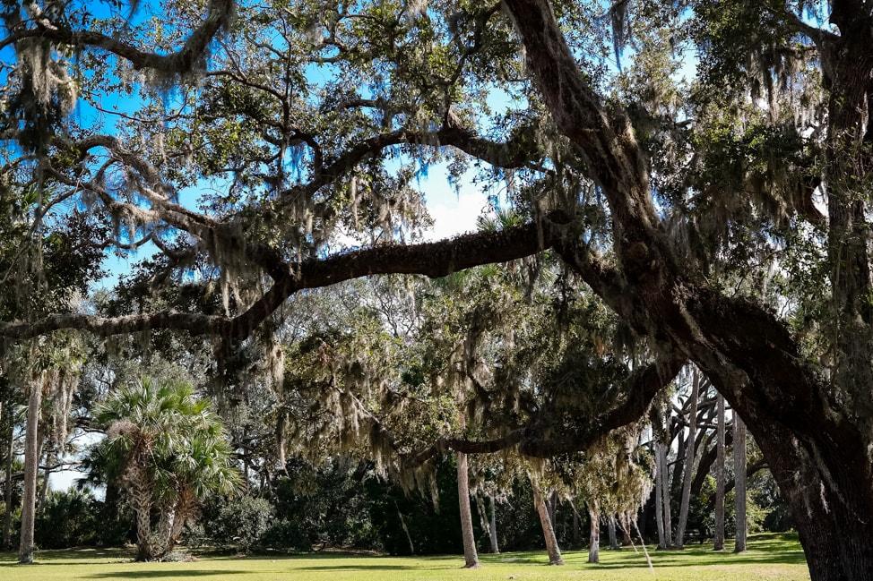 amelia island wedding the huge oak tree at the Ribault Club