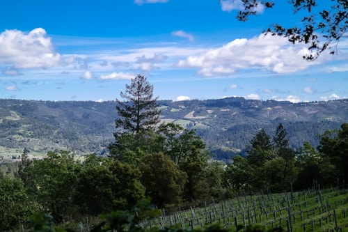 what to do in Napa Valley: the view of the valley from Spring Mountain