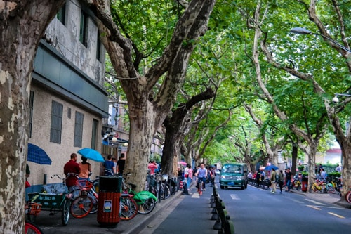 Walking Through History in Shanghai's Former French Concession thumbnail