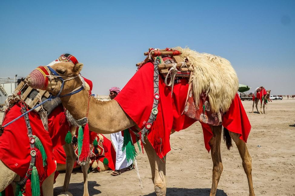 desert safari in Qatar